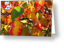 Sunlit Fall Leaves Greeting Card