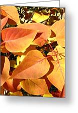 Sunlit Fall Lilac Greeting Card