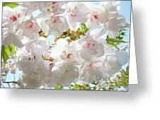 Sunlit Flowers Art Prints White Tree Blossoms Baslee Troutman Greeting Card