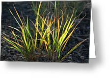Sunlit Grass Greeting Card