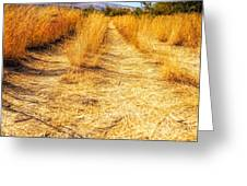 Sunlit Grasses Greeting Card