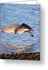 Sunlit Gull Wings Greeting Card