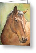 Sunlit Horse Greeting Card