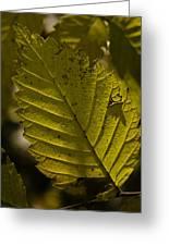 Sunlit Leaf Greeting Card