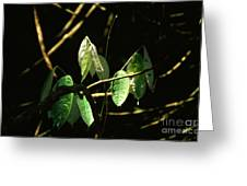 Sunlit Leaves Greeting Card
