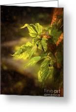Sunlit Leaves Greeting Card