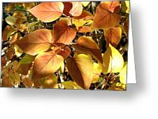 Sunlit Lilac Leaves Greeting Card