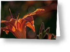 Sunlit Lilly Greeting Card