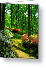 Sunlit Path Greeting Card