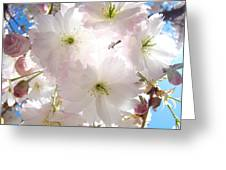 Sunlit Pink Blossoms Art Print Spring Tree Blossom Baslee Greeting Card