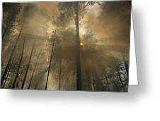 Sunlit Smoke Whispers The Firefighters Greeting Card