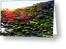 Sunlit Stones Greeting Card