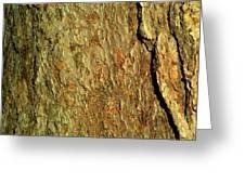 Sunlit Tree Bark Greeting Card