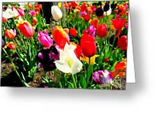 Sunlit Tulips Greeting Card