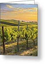 Sunlit Vineyard Greeting Card
