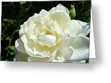 Sunlit White Rose Art Print Floral Giclle Print Baslee Troutman  Greeting Card
