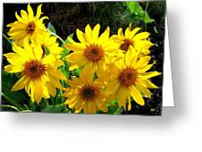 Sunlit Wild Sunflowers Greeting Card