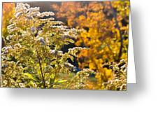 Sunlit Wildflower Greeting Card