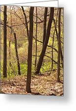 Sunlit Woods Greeting Card