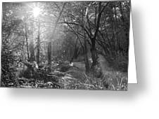 Sunlit Woods, West Dipton Burn Greeting Card