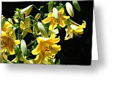 Sunlit Yellow Lilies Art Prints Botanical Giclee Baslee Troutman Greeting Card