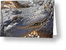 Sunning Alligator 2 Greeting Card
