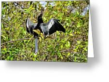 Sunning Anhingas Bird One Greeting Card