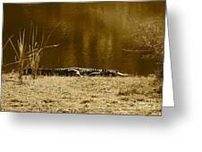 Sunning Gator Greeting Card