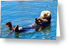 Sunning Otter Greeting Card