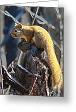 Sunning Squirrel Greeting Card