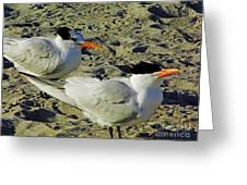 Sunning Terns Greeting Card