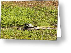 Sunning Turtle In Swamp Greeting Card