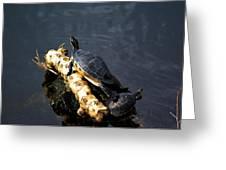 Sunning Turtles Greeting Card
