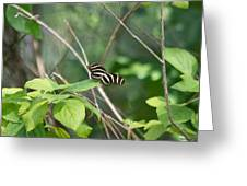 Sunning Zebra Longwing Butterfly Greeting Card