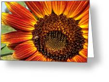 Sunny And Bright Today.  Greeting Card