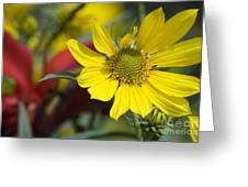 Sunny Blooms Greeting Card