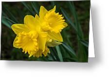 Sunny Daffodils Greeting Card