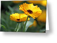 Sunny Day Flowers Greeting Card