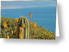 Sunny Day In California Greeting Card