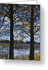 Sunny Day On The Pond Greeting Card