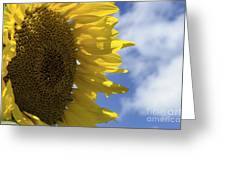 Sunny Faces And Blue Skies Greeting Card