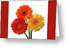 Sunny Gerbera On White Greeting Card