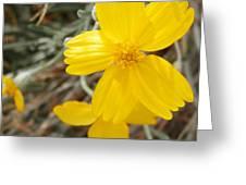 Sunny Girls Greeting Card