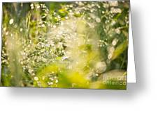 Sunny Grass After The Rain Greeting Card