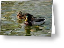 Sunny Mallard Ducks Greeting Card