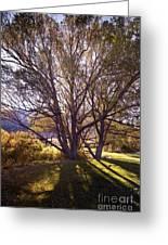 Sunny Mono Tree Greeting Card