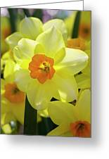 Sunny Narcissus Greeting Card
