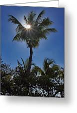 Sunny Palm Greeting Card
