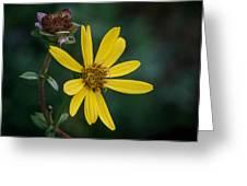 Sunny Petals Greeting Card