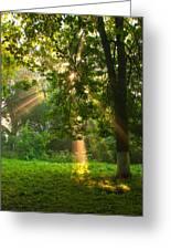 Sunny Rays Greeting Card